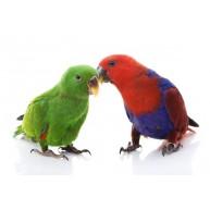 Naklejka Drukowana papugi