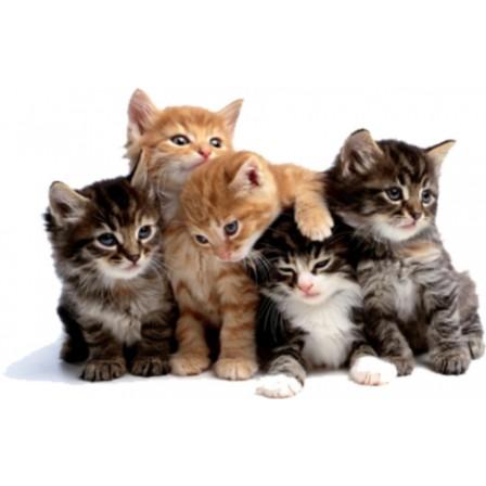 Naklejka Drukowana  małe kotki