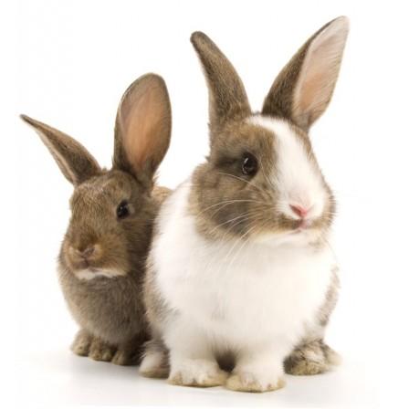 Naklejka Drukowana króliki