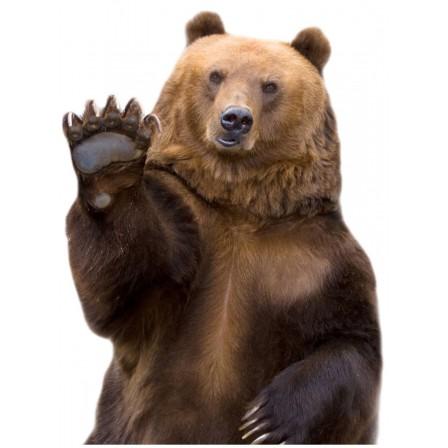 Naklejka Drukowana niedźwiedź