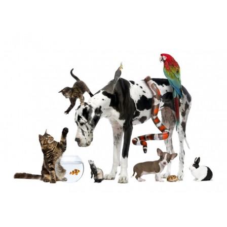 Naklejka Drukowana zwierzęta domowe i dzikie