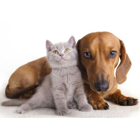 Naklejka Drukowana pies i szary kot