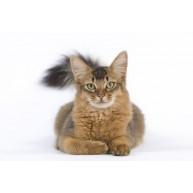 Naklejka Drukowana  leżący kot