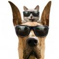 Naklejka Drukowana  pies i kot w okularach