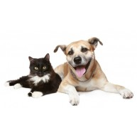 Naklejka Drukowana pies i czarny kot