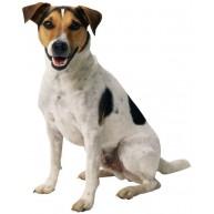 Naklejka Drukowana wesoły pies