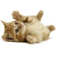 Naklejka Drukowana leżący mały kotek