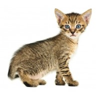 Naklejka Drukowana  mały kotek