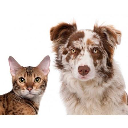 Naklejka Drukowana  kot i pies w łatki