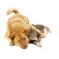 Naklejka Drukowana  pies przytulony do kota