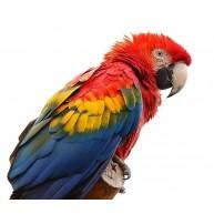 Naklejka Drukowana kolorowa papuga