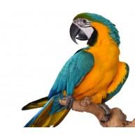 Naklejka Drukowana   kolorowa papuga 01