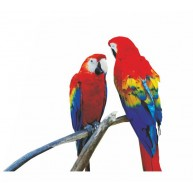 Naklejka Drukowana  dwie kolorowe papugi