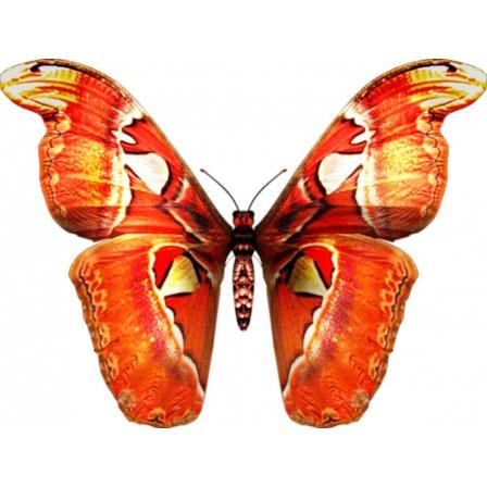 Naklejka Drukowana pomarańczowy  motyl