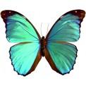 Naklejka Drukowana błękitny motyl