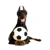 Naklejka Drukowana czarny pies z piłką