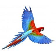 Naklejka Drukowana frunąca kolorowa papuga