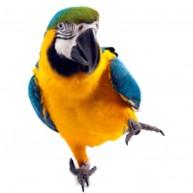 Naklejka Drukowana kolorowa papuga na jednej nodze