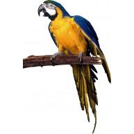 Naklejka Drukowana żółta papuga