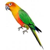 Naklejka Drukowana zielono żółta papuga