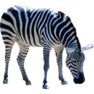 Naklejka Drukowana   zebra