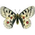 Naklejka Drukowana biały motyl