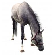 Naklejka Drukowana  szary koń