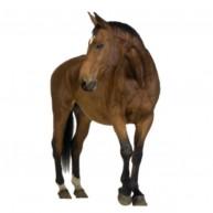 Naklejka Drukowana koń kasztanek 02