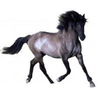 Naklejka Drukowana biegnący koń 02