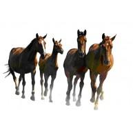Naklejka Drukowana biegnące konie 01