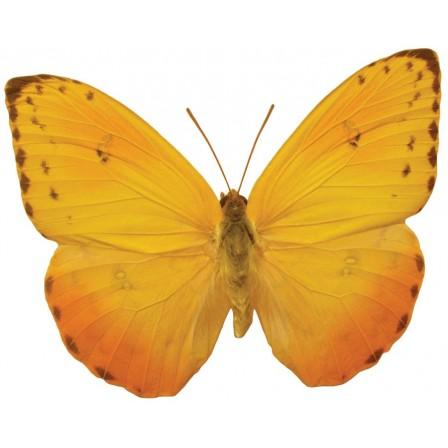 Naklejka Drukowana żółty  motyl
