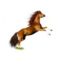Naklejka Drukowana koń 03