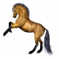Naklejka Drukowana koń 04