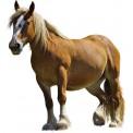 Naklejka Drukowana koń 05