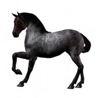 Naklejka Drukowana czarny koń 01