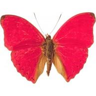 Naklejka Drukowana czerwony  motyl