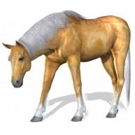 Naklejka Drukowana koń 07