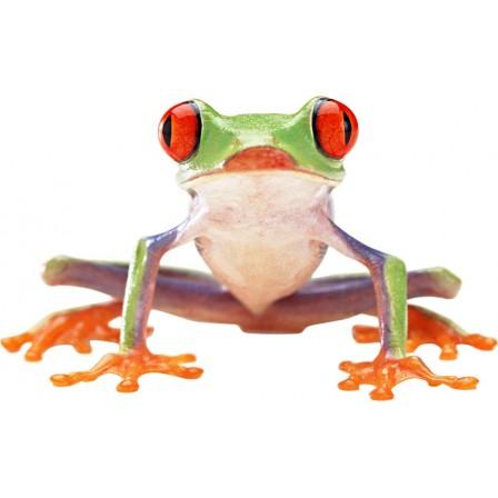 Naklejka Drukowana zielona żaba 01