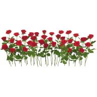 Naklejka Drukowana     czerwone róże