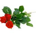 Naklejka Drukowana   czerwone róże 02