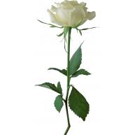 Naklejka Drukowana   biała róża 06
