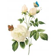 Naklejka Drukowana   biała róża z motylami