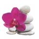 Naklejka Drukowana  różowy storczyk na kamieniach