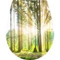 Naklejka Deska sedesowa - las, drzewa, liście, słońce