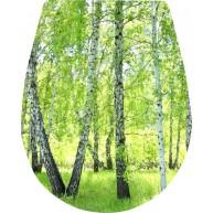 Naklejka Deska sedesowa - drzewo, las, brzozy, wiosna
