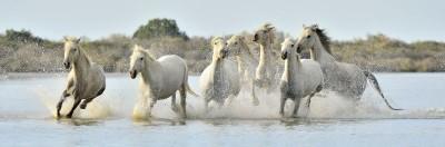 Białe konie drzewa natura zwierzęta