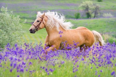 Koń łąka pola kwiaty natura zwierzęta