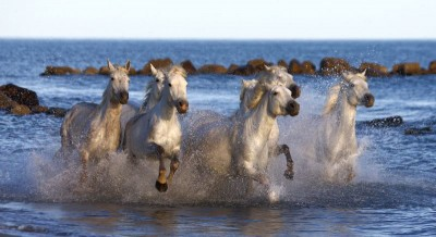 Białe konie skały morze ocean natura zwierzęta