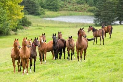 Konie łąka drzewa jezioro natura zwierzęta