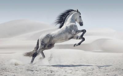 Koń pustynia natura zwierzęta